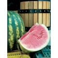 WATERMELON Crimson Sweet (Citrullus lanatus) ANGURIA Crimson Sweet