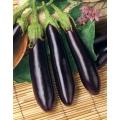 ПАТЛАДЖАН Продълговат (Solanum melongena L.)