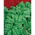 СПАНАК Америка (Spinacia oleracea L.) SPINACIO America