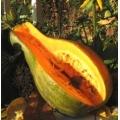 ТИКВА Дълга От Неапол (ЦИГУЛКА) (Lagenaria vulgari orticola)