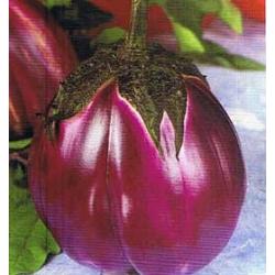 ПАТЛАДЖАН Виолетов Флорентински (Solanum melongena L.)