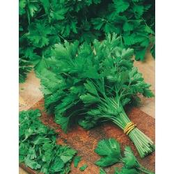 МАГДАНОЗ Гигантски От Наполи (Petroselinum crispum L)
