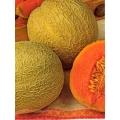 ПЪПЕШ Портокал (Cucumis melo L.) MELONE Arancino