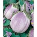 ПАТЛАДЖАН Бял Романеска (Solanum Melongena L.)