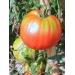 ДОМАТ Пантано (Lycopersicum lycopersicum)