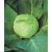 ЗЕЛЕ ГЛАВЕСТО Копенхаген Маркет (Brassaica Oleracea L.)