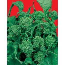 РЯПА ТИП БРОКОЛИ Шестдесет дневна (Brassica rapa esculenta L.)
