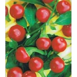 ПИПЕР ЧУШЛЕТА Люта Черешка (Capsicum annum)