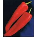 ПИПЕР Рогът На Червения Бик (Capsicum annum)