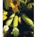 ТИКВИЧКА Градинарска От Фаенца (Cucurbita pepo)