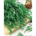 ЕСТРАГОН (Artemisia Dracunculus, L. ) DRAGONCELLO