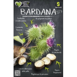 РЕПЕЙ (Arctium Lappa L.) BARDANA