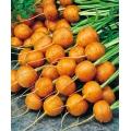 МОРКОВ Паришки (Daucus carota L.) CAROTA Di Mercado De Paris 3