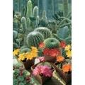 КАКТУСИ МИКС (Cactus) CACTACEE Piante Grasse MIX